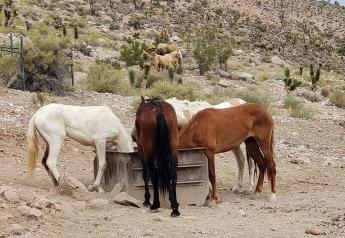 Horses in Nevada's Red Rock Canyon National Conservation Area.