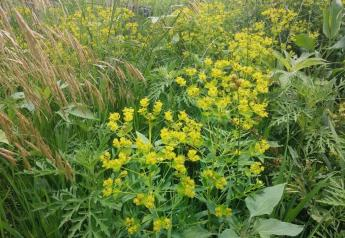 Early and correct identification of pasture weeds is the first step in maintaining a healthy pasture.