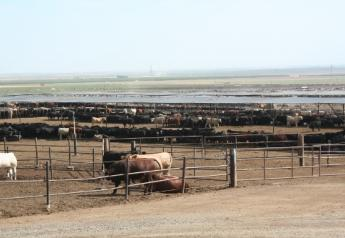 During the PMI, the calves acclimate to their new environment, stress levels decline, feed intake increases and immune suppression drops off, in part due to immune response to existing pathogens.