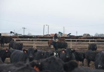 Heifer slaughter is up 7.4 percent from one year ago.