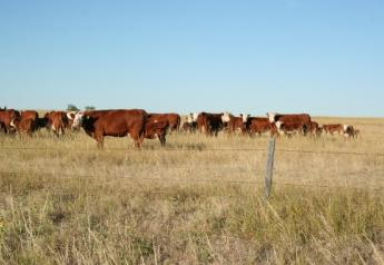 Only 3.7 percentof U.S. GHG emissions come directly from beef cattle.
