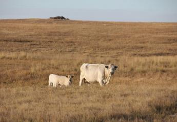 reduced forage due to drought in North Dakota