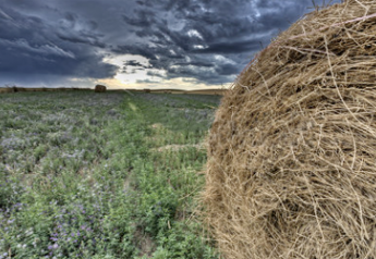 South_Dakota_Alfalfa