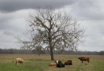 Willow Glenn Plantation in West Columbia benefits from a state program aimed at conserving land.
