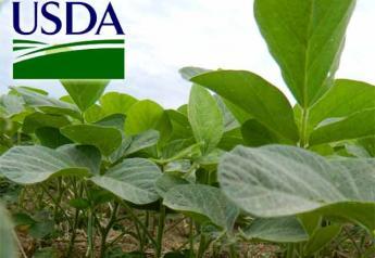 USDA-soybeans-closeup