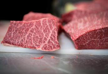 Marbling of the Kampo Wagyu beef.