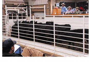 A new rule would allow beef and soybean producers to send checkoff dollars straight to their national boards, bypassing their state boards.