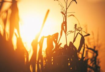 corn_harvets_sunset