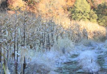 harvest-corn-and-frost
