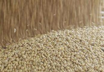 loading_soybeans