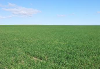 wheat_april