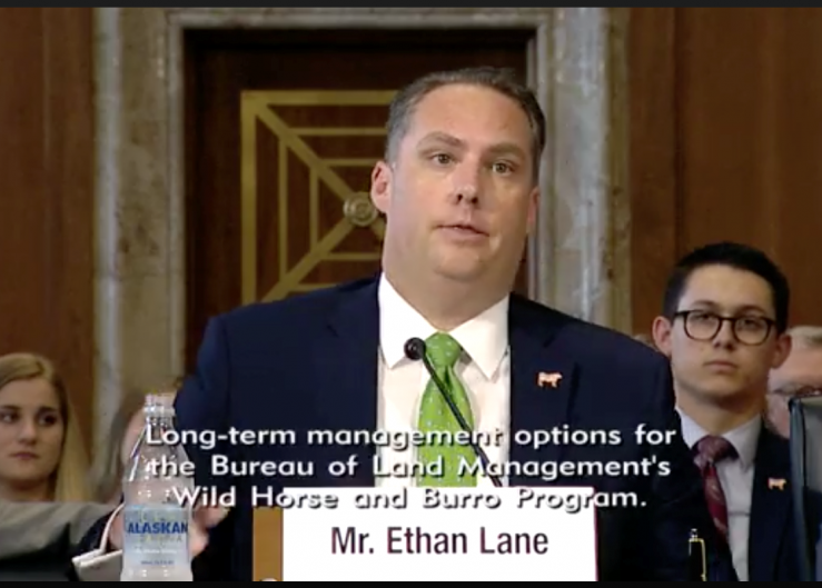 """Excessive populations deplete scarce food and water resources on the arid rangelands, leading to starvation and dehydration of the horses and burros,"" Ethan Lane, NCBA and PLC, told members of the Senate's Committee on Energy and Natural Resources Subcommittee on Public Lands, Forests, and Mining."