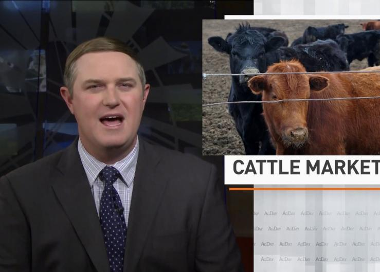 Cattle and hog margins positive
