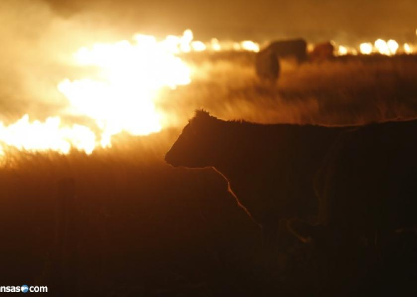 As many as 10,000 cattle died as a result of the wildfires.