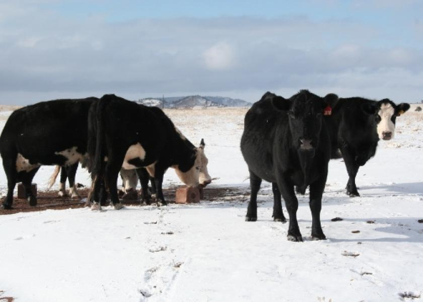Offer feed-through products before fly season begins so treated manure is waiting as flies emerge and begin breeding.