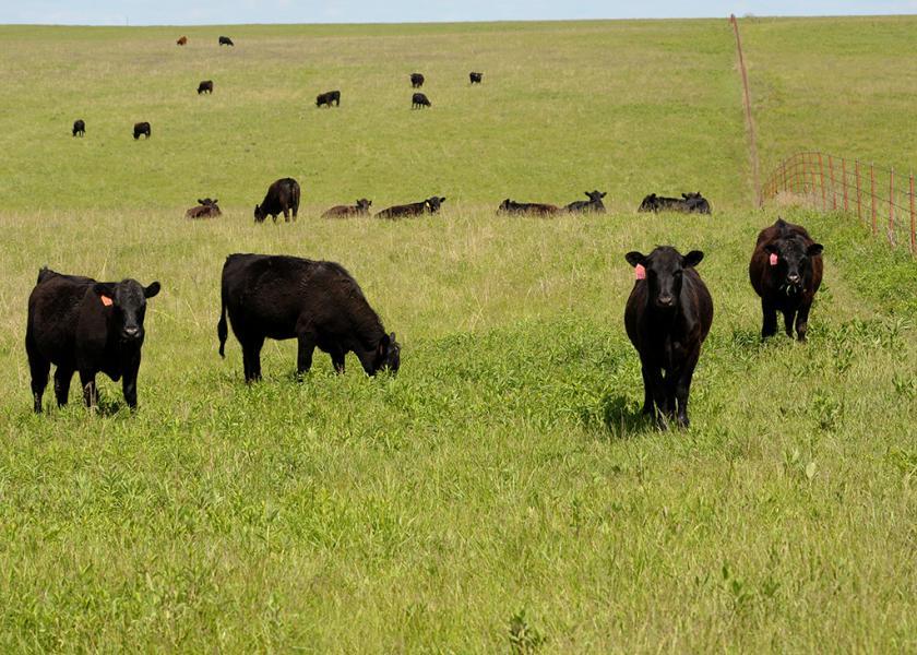 Flint Hills grazing