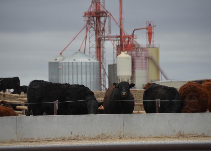Cattle markets $1 lower