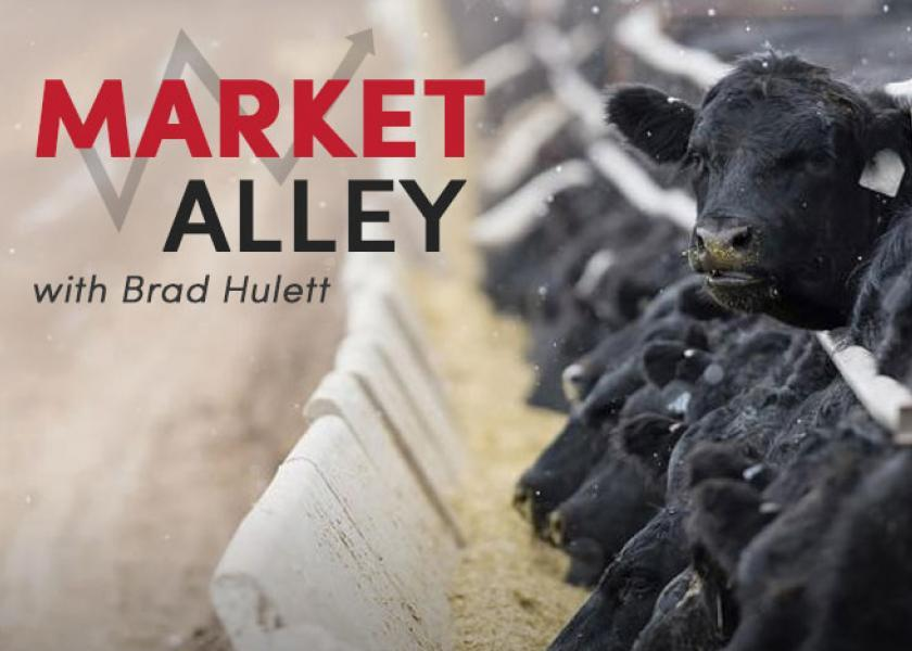 Cash cattle traded lower