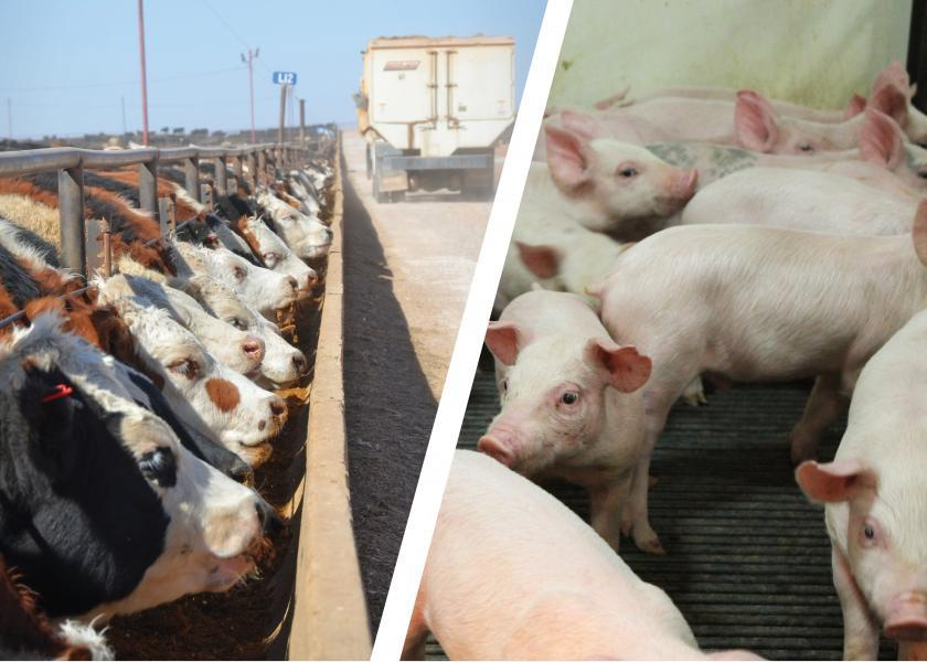 Cattle and hog feeding margins