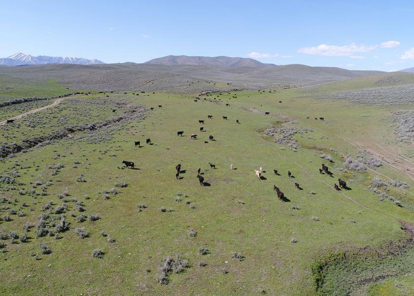 Y3 Ranch, Idaho