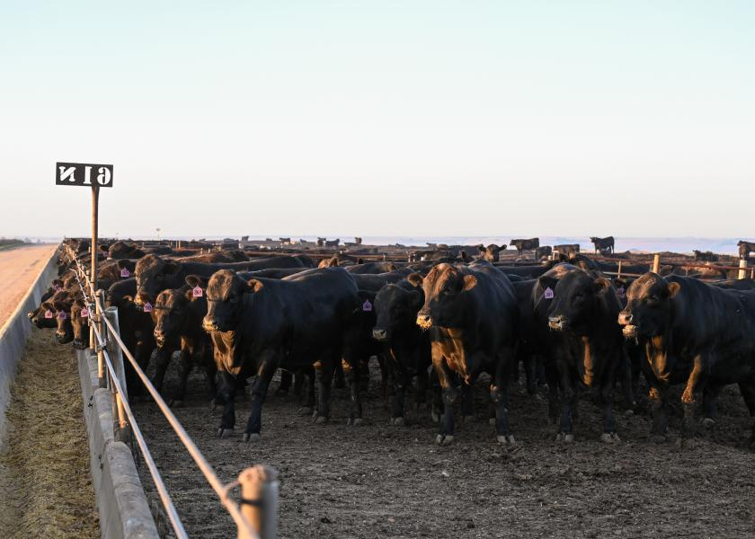 Nebraska Feedyard