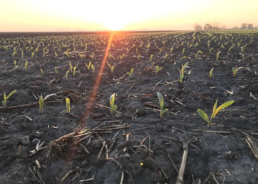 During USDA's 2021 Ag Outlook Forum this week, chief economist Seth Meyer pointed to a possible bump in overall planted acres this year, with 92 million acres planted in corn, 90 million in soybeans and 12 million acres of cotton.