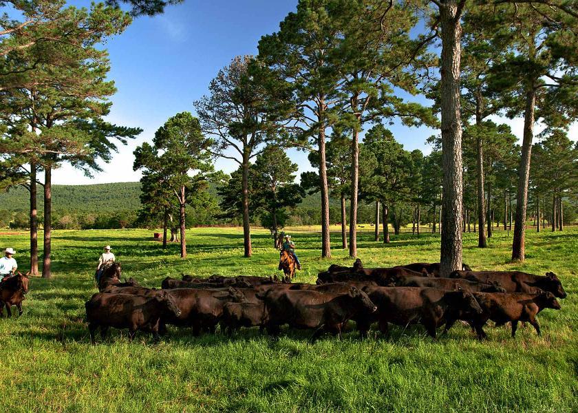 Kiamichi Ranch