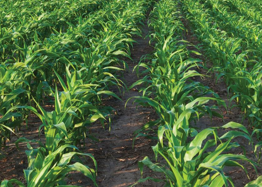 Grain Belt farmland prices have seen strong surge since late last year.