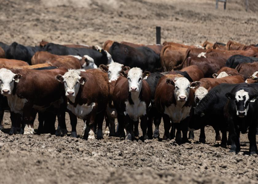 Cattle trade gained $2 to $3