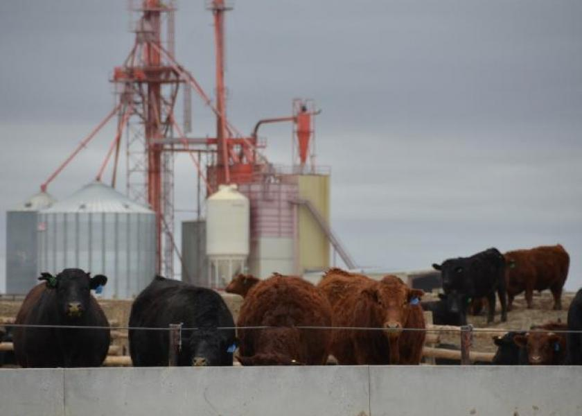 Beef markets recovering