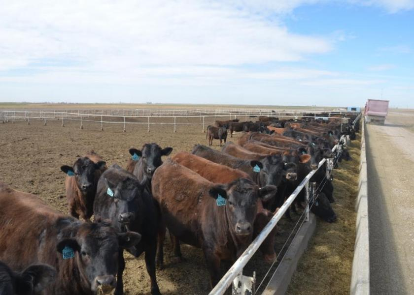 Technology can help prevent treating cattle that are not ill.