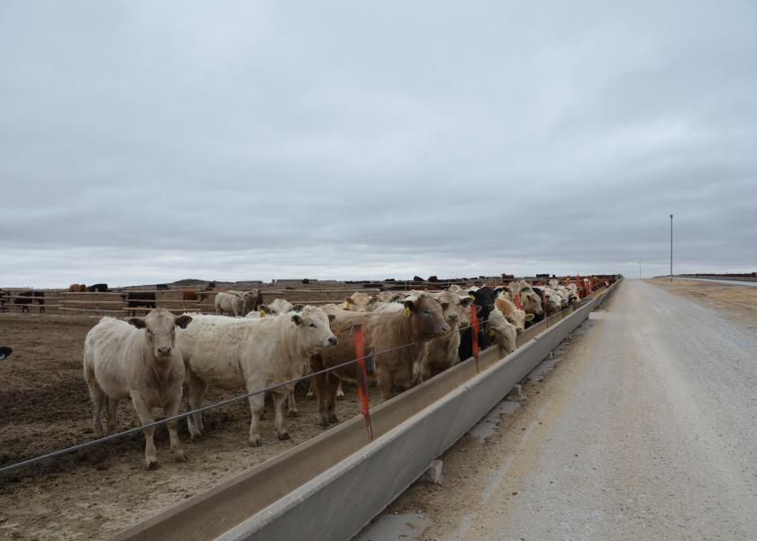 Cattle on feed trend higher