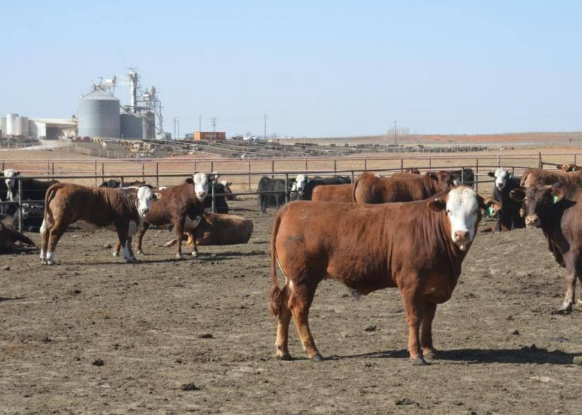 Fed cattle traded in a wide range