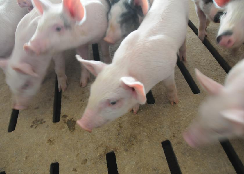 African swine fever (ASF) could be the biggest event in animal protein for years, as the devastating disease spreads beyond China's borders.