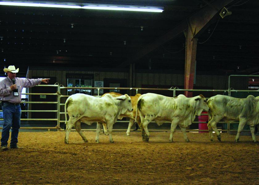 Ron Gill demonstrates challenges and skills in moving cattle.
