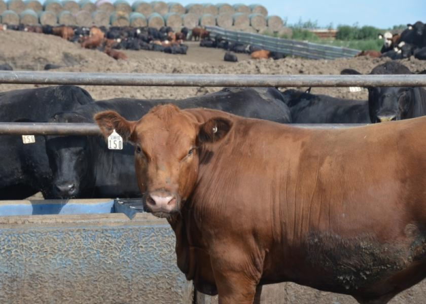 BT_Feedlot_Cattle_Hay_Stack_Water_Tank