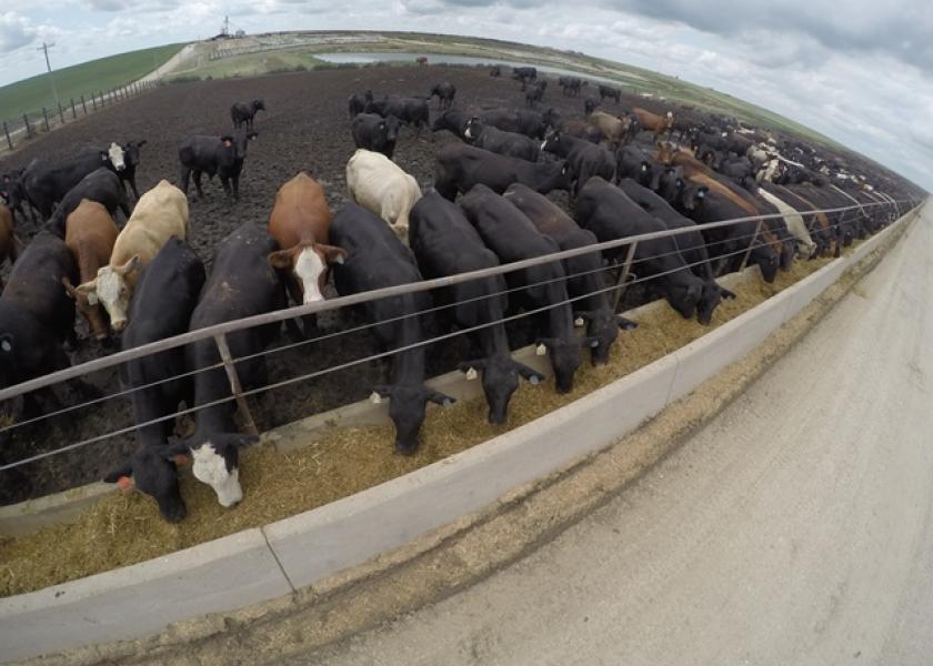 GoPro Feedlot Cattle