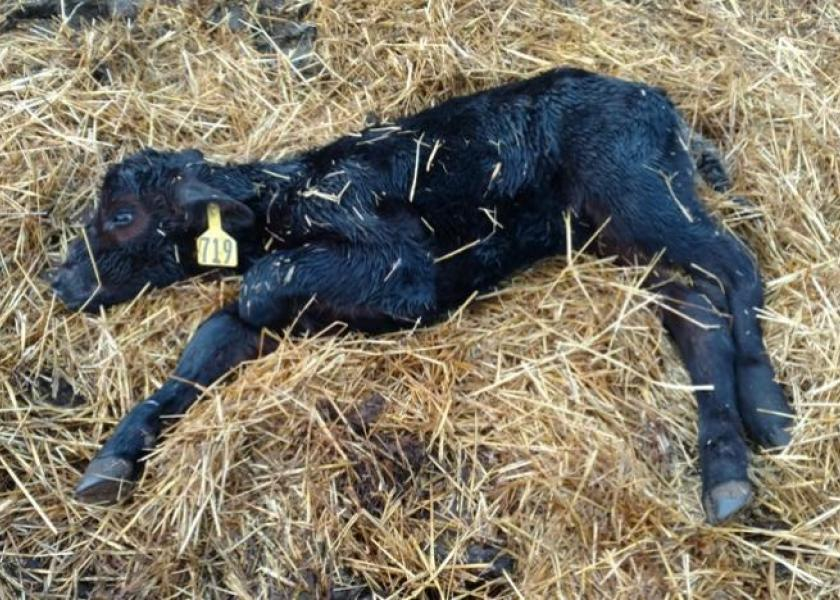 First and foremost, a clinician must be able to appropriately estimate the degree of dehydration of an ill calf during the physical examination.