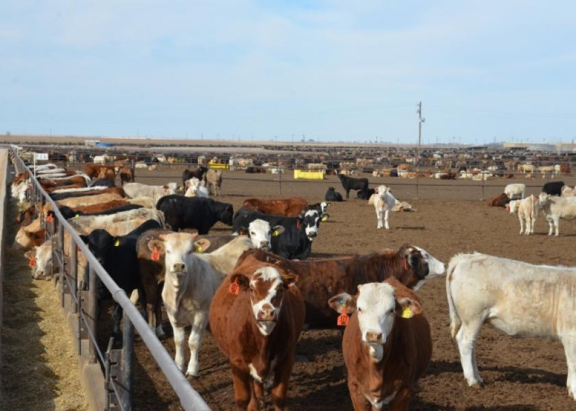 R-CALF seeks solutions to improve cattle markets.