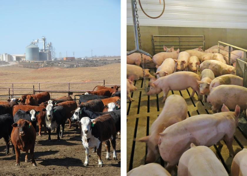 Cattle and hog feeding margins