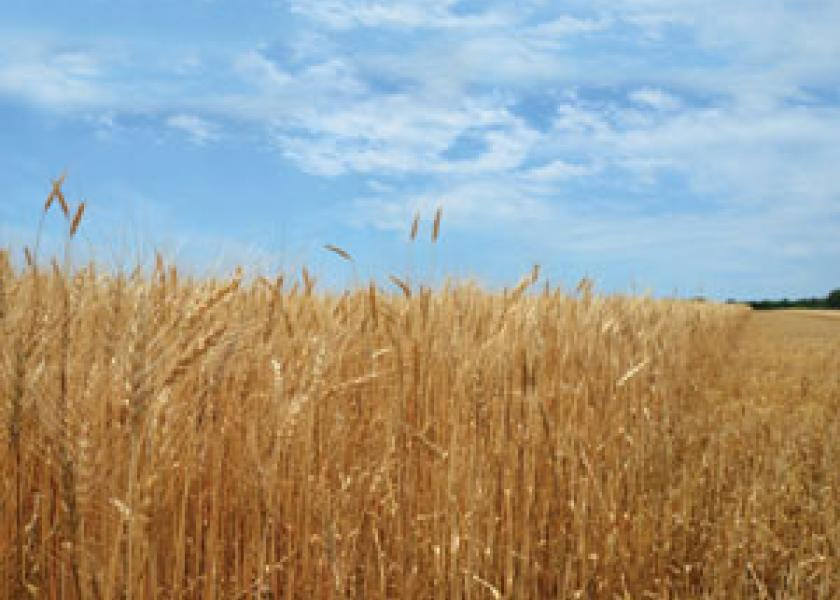 Ukraine's wheat harvest is set to surge as crop escapes winter-kill..