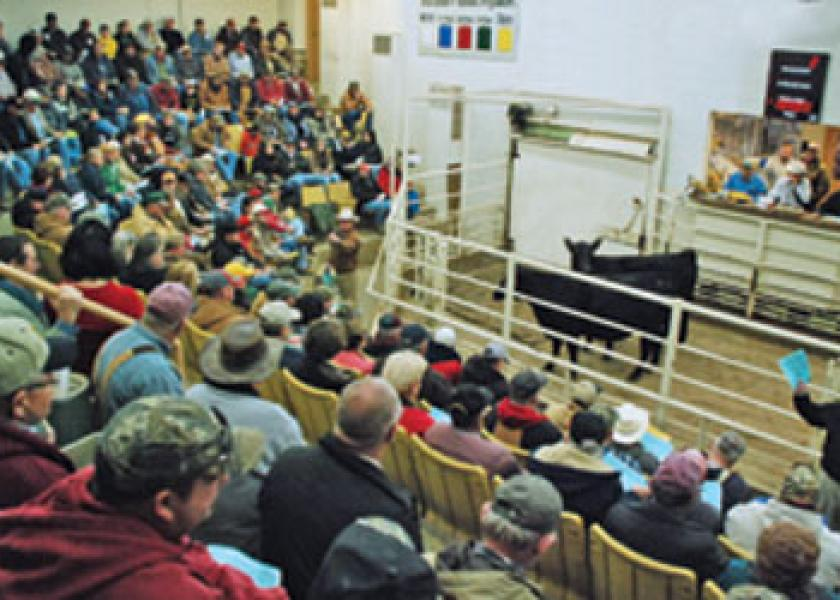 heifer auction